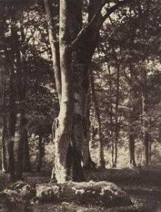Gustave Le Gray - Wald von Fontainebleau